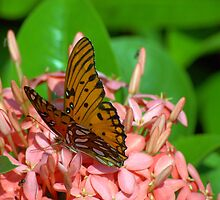 The Viceroy and Ixora by Glenn Cecero