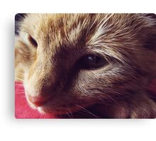 Dharma the cat Canvas Print