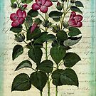 Italian Hibiscus Vintage Botanical  by Christine Annas