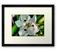 HDR Flowers Framed Print