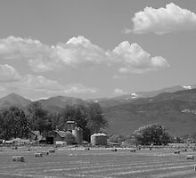 August Hay Rocky Mountains  by Bo Insogna