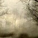 Misty Woods by Richard Murch