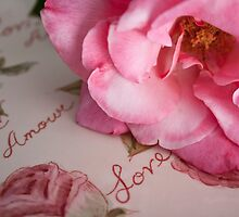 A Rose Is A Rose by Jacquelyne Drainville