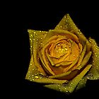 Yellow Rose by Denise Abé