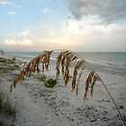 Sea Oat at Sunset by Rosie Brown