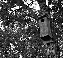 Wood Duck House by photolover08
