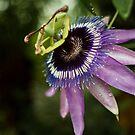 Flower by David Preston
