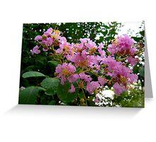 Bloomy Tree Flower Crepe Myrtle North Carolina Greeting Card