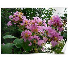 Bloomy Tree Flower Crepe Myrtle North Carolina Poster