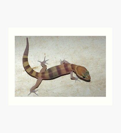 Tucson Banded Gecko Art Print