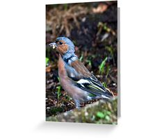 Chaffinch Greeting Card