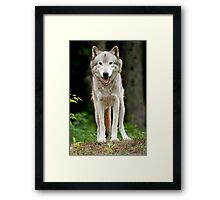 I'll huff and I'll puff and......just look cute! Framed Print