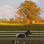 The horse and the tree by vigor