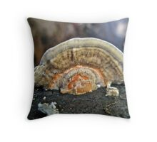 Fuzzy Turkey Tail Shelf Fungus - Trametes ochracea Throw Pillow