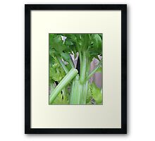 A Snap of Celery Framed Print