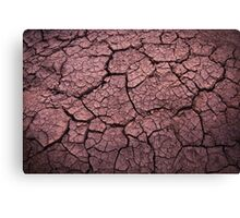 Bone dry in the outback Canvas Print