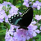 Black Butterfly on Purple Posies by teresa731