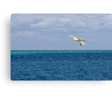 Silver Gull over Water Canvas Print