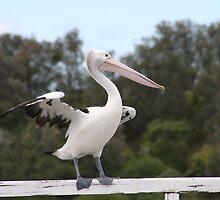 pelican by Sherie Howard