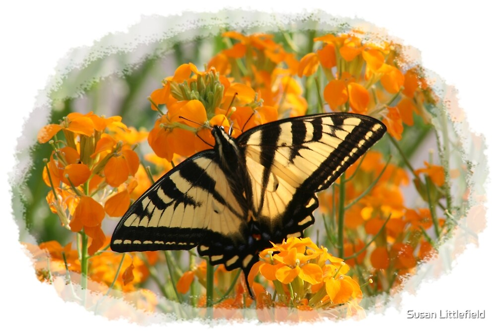 Swallowtail by Susan Littlefield