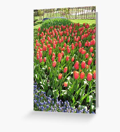 Ladies in Red - Dazzling Red Tulips Greeting Card