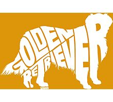 Golden Retriever White Photographic Print