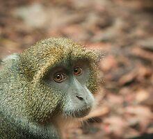 Diademed (Blue) monkey by tarnyacox