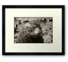 Sea Lion Pup New Zealand Framed Print