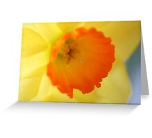Enchanting Daffodil Greeting Card