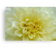 Bright White Dahlia Canvas Print