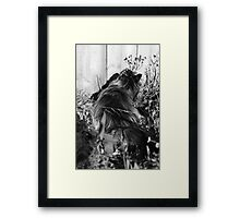 Potted Maine Coon Framed Print
