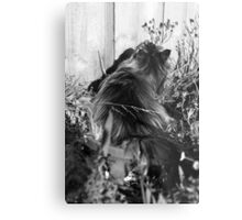 Potted Maine Coon Metal Print