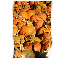 Pumpkin Patch Harvest Poster