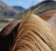 Horseback by Hilda Rytteke