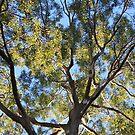 Gum Tree by aussiebushstick