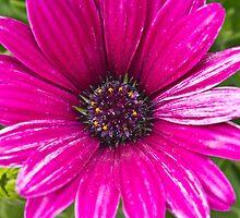 Backyard Blossoms by Tom Gotzy