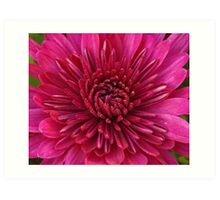 Red Aster Art Print