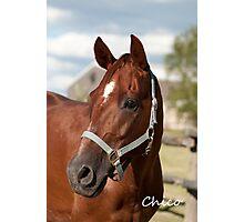 Chico - NNEP Ottawa, ON Photographic Print