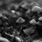 Mushroom army by Jocelyn  Parry-Jones