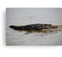 Lazy Gator Canvas Print