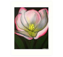 White Pink Tulip #13 Art Print