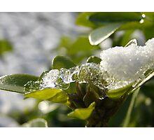Ice Capture Photographic Print