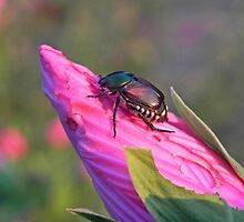 beetle on a bud by bannercgtl10