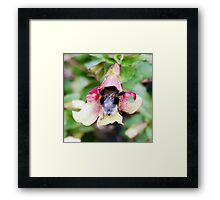 Bee - Does my bum look big in this? Framed Print