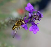 Hornet on Purple Flower by AmandaJanePhoto