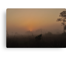 Foggy Sunrise in the Everglades Canvas Print