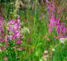 Fireweed Dreams by Margaret Goodwin