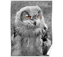 Skeptical Owl....Is Skeptical. Poster