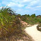 Grass Path by Paul Benjamin
