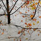 Flooded tree by Federico Del Monte